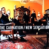 The Carnation - New Sensation